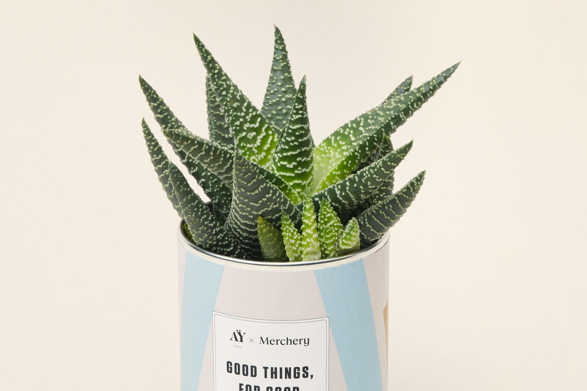 AY Cactus - Branded Plant Gift - Merchery