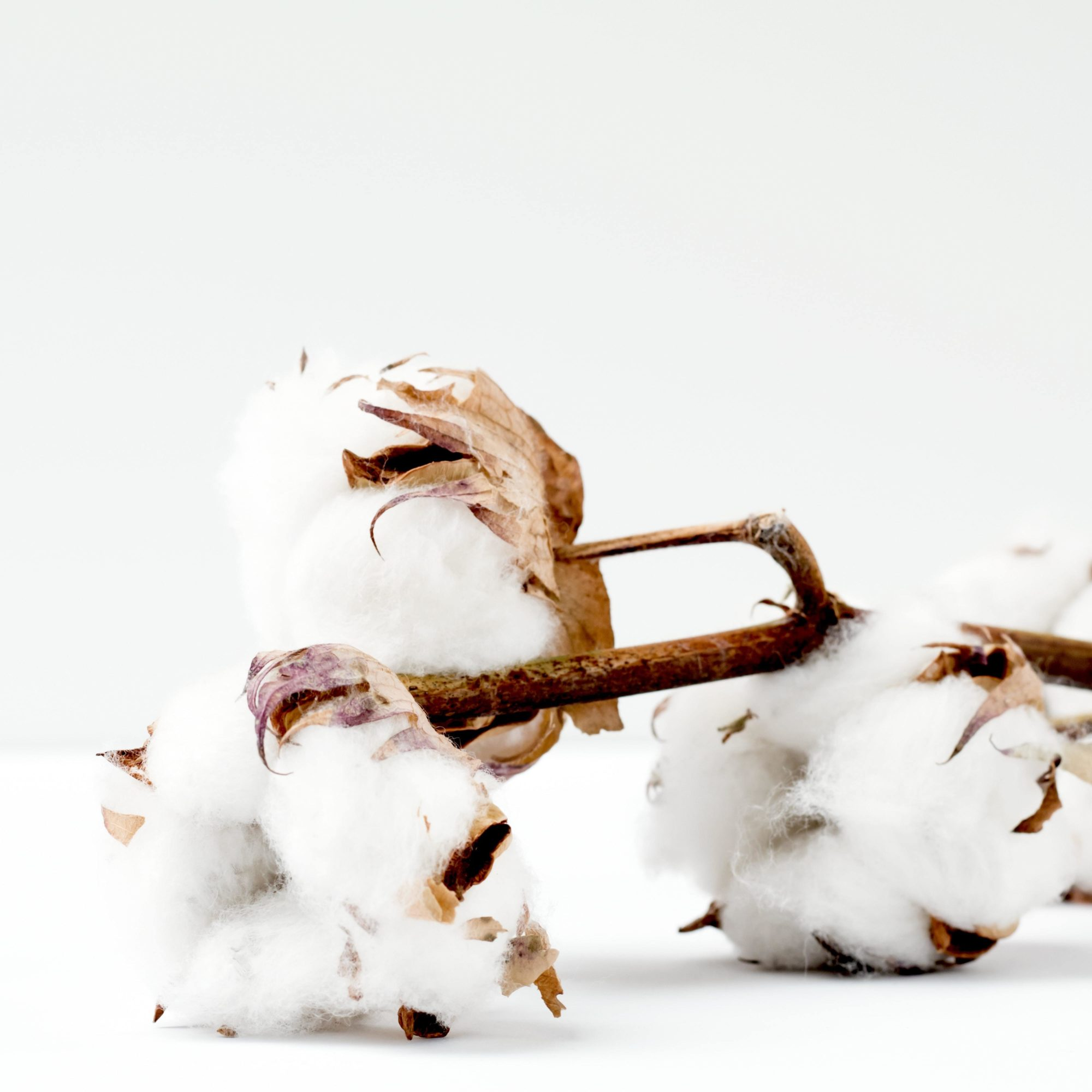 Organic cotton for sustainable branded clothes